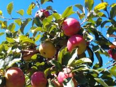 apple_picking_IA